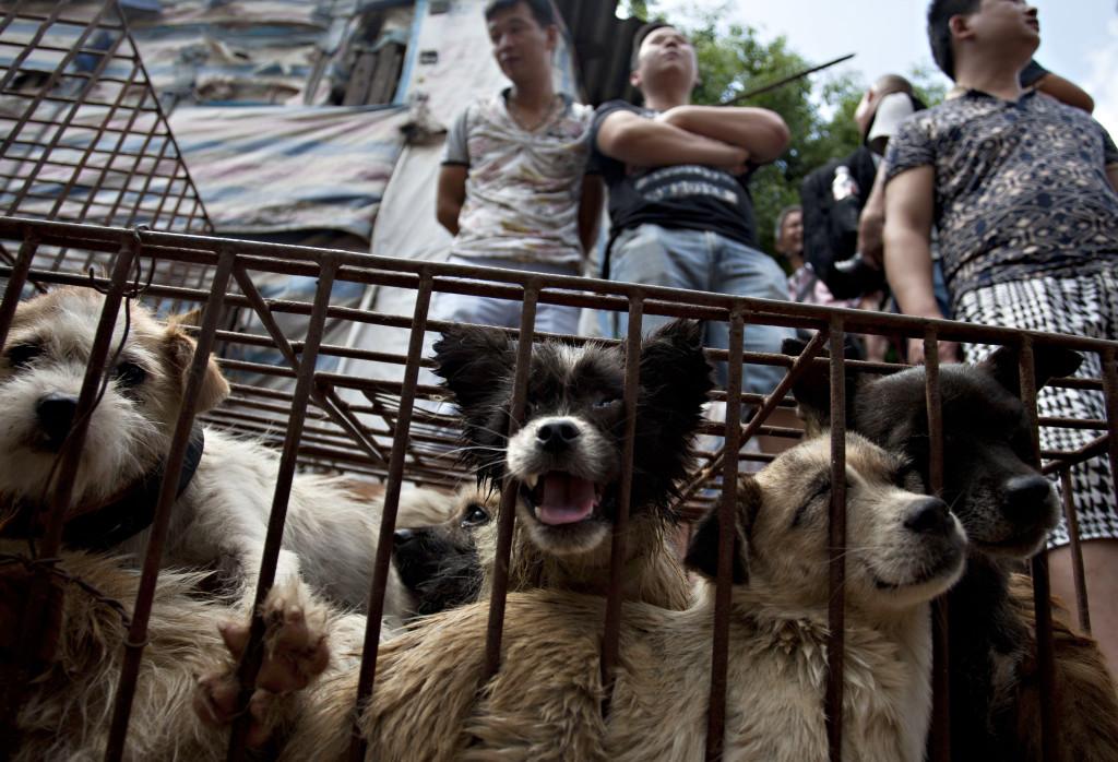 CHINA-ANIMAL-DOG