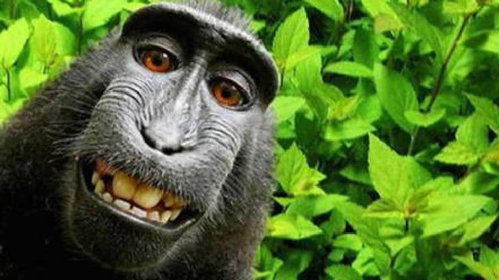 3b38cc83-ecd0-4734-8889-fb0554c123bb-large16x9_monkeyselfienaruto