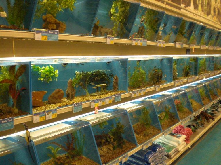 pet_store_fish_03-19-2008